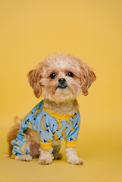 En Clinica veterinaria huellas cuidamos de tu mascota