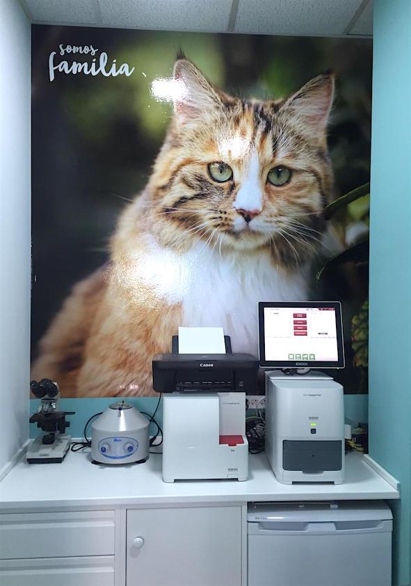 analisis-veterinario-huellas