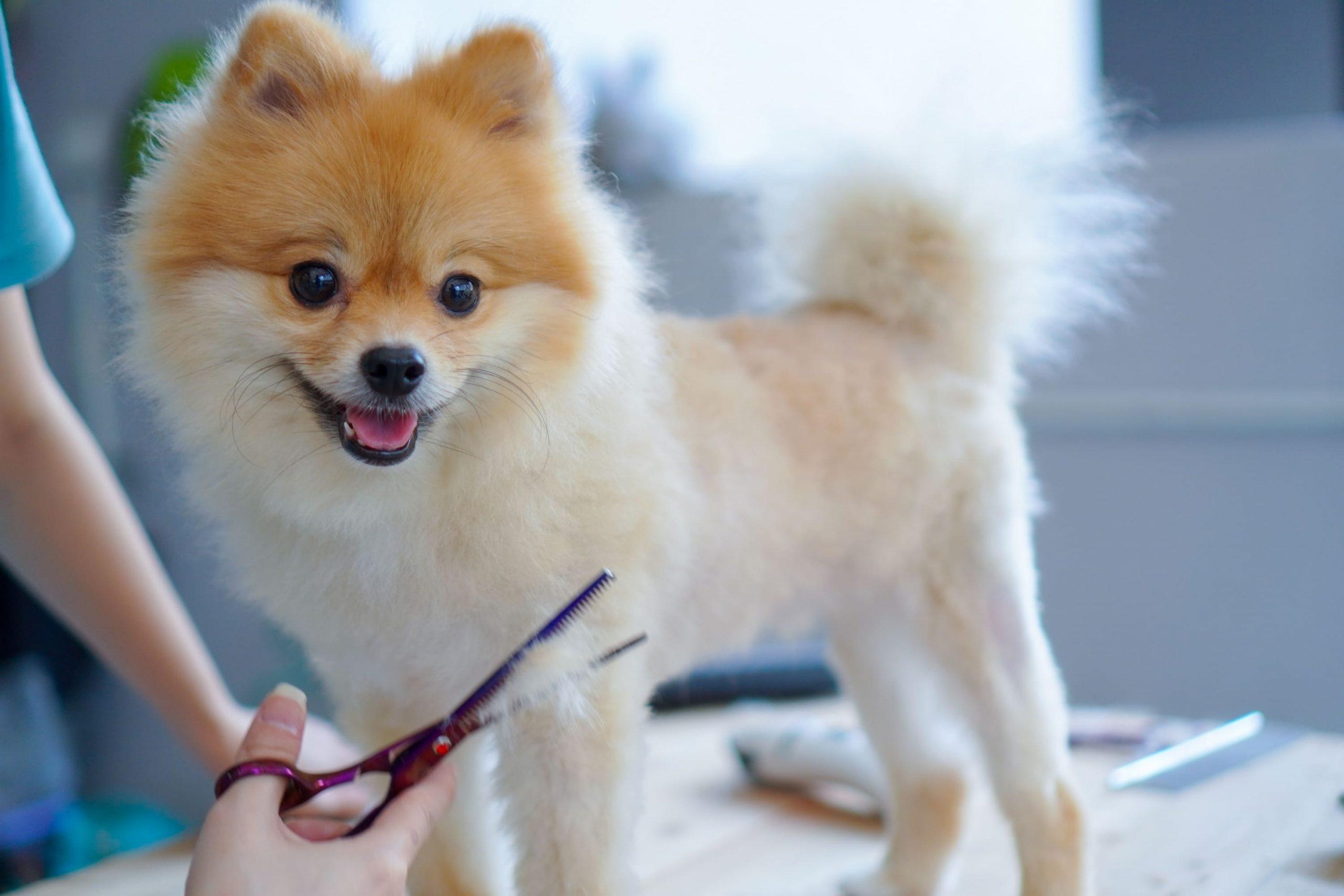 corte de pelo a perro