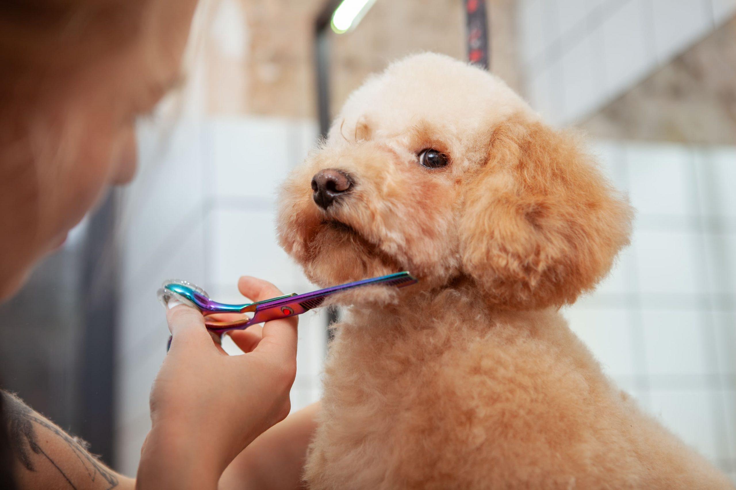 servicio de peluqueria canina mostoles